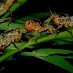 Dal cervello degli insetti molecole utili per nuovi antibiotici