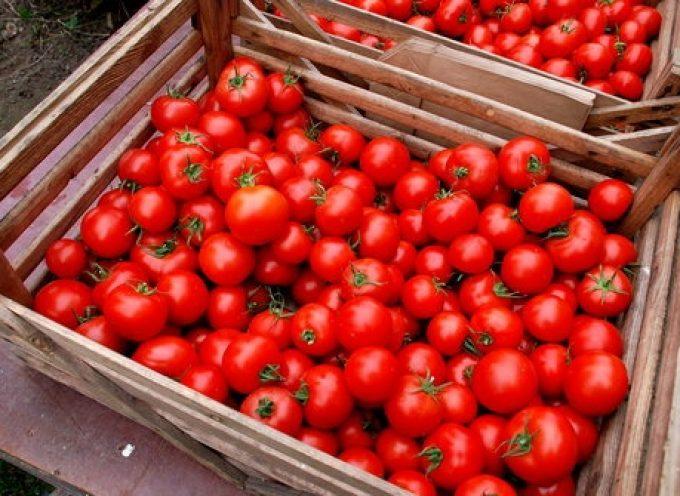 Crisi del pomodoro: Approvato il mandato per la costituzione di una task force di controllo