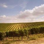 Ritorno alle origini. Il Movimento Turismo del Vino va a Montalcino