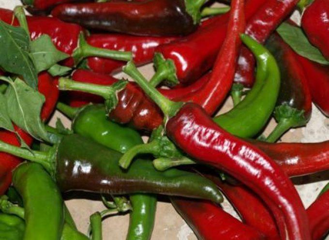 Il peperone dolce di Altino (CH) protagonista il 28 e 29 agosto