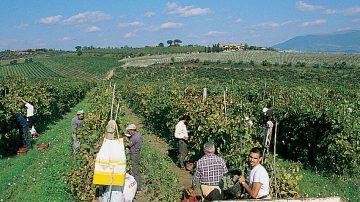 9 settembre. Benvenuta Vendemmia col Movimento Turismo del Vino