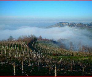 Scandalo (o routine) di vino taroccato:  Bonarda e Barbera Pavese