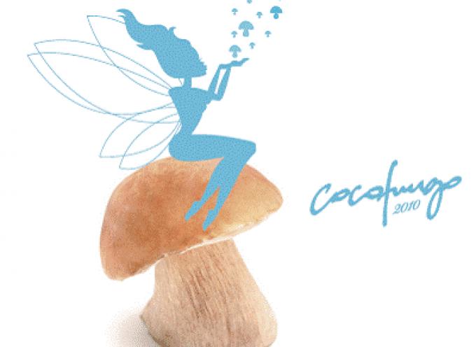 Le emozione delle favole rivivono grazie agli chef CocoFungo e ai loro sette mestoli magici