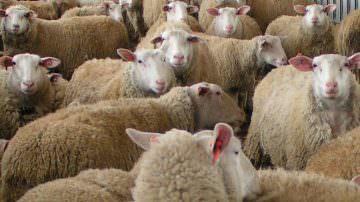 """Giunta Nazionale Cia: """"Pomodoro e latte ovino hanno prezzi miseri"""""""