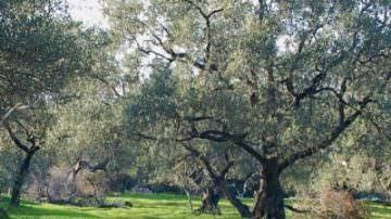 """Roberto Benigni: """"Gli olivi del Salento leccese guariscono da tutte le malattie"""""""