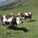 Montana a sostegno degli allevatori italiani terremotati