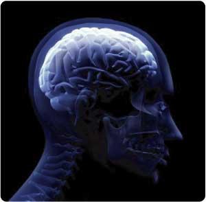L'obesità riduce il cervello