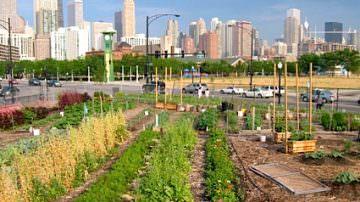 """Fao: """"L'orticoltura urbana offre una via d'uscita alla povertà"""""""