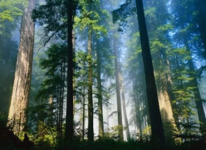 Biodiversità forestale minacciata da deforestazione, degrado, cambiamento climatico, insetti e parassiti