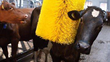 AgriExpo 2011: In primo piano il benessere animale