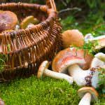Coldiretti, la pioggia di Poppea ultima chance per funghi e tartufi
