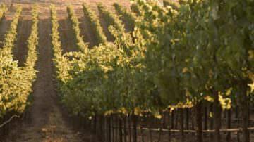 Premio Godio 2010: I vini eroici di montagna accompagneranno i piatti preparati dai finalisti