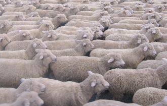 Pastori e agricoltori assediano Cagliari
