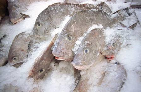 """Pesce: Aumentarne il peso """"artificialmente"""" conviene a chi lo vende"""