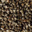 I pizzoccheri sono fatti con grano saraceno, non grano turco o grano del moro