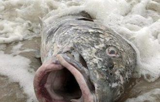 Dopo gli uccelli, tocca ai pesci: a Beebe continua la strage