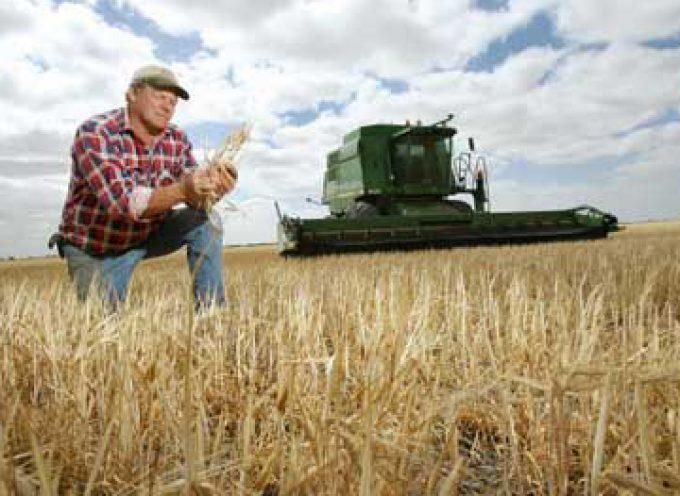 Progetto super-grano: meno infezioni, più resa dei campi