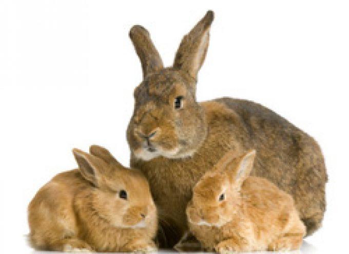 Coniglicoltura: Incredibile aumento dei costi di produzione