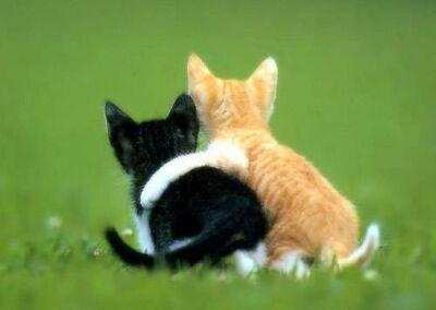 Alla base dell'amicizia c'è il DNA. Più è simile, più si va d'accordo
