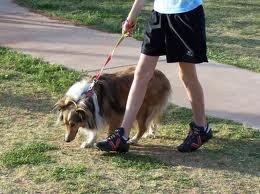 A passeggio col cane: più movimento, cuore più sano