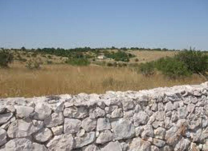 Nella Murgia pugliese, dove il vino nasce dalla roccia