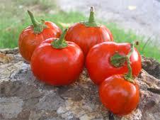 Tonda come una mela, colorata come un'arancia: è la melanzana rossa di Rotonda