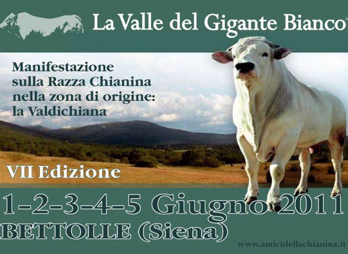 """""""La Valle del Gigante Bianco"""": Manifestazione dedicata alla Razza Chianina e alla Valdichiana"""