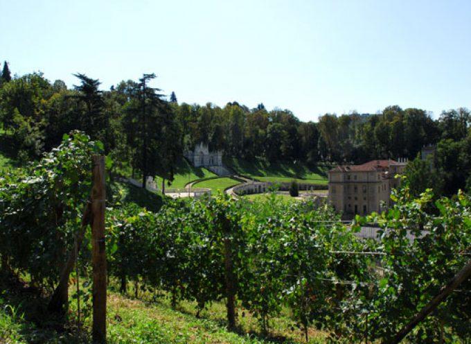 Torino: Presentato il vino degli antichi vigneti di Villa della Regina