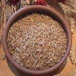 Grano khorasan KAMUT: Uno studio ne dimostra le proprietà antiossidanti