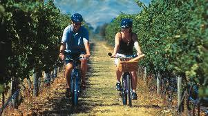Tra vino e bicicletta, tre vie per scoprire il Trentino
