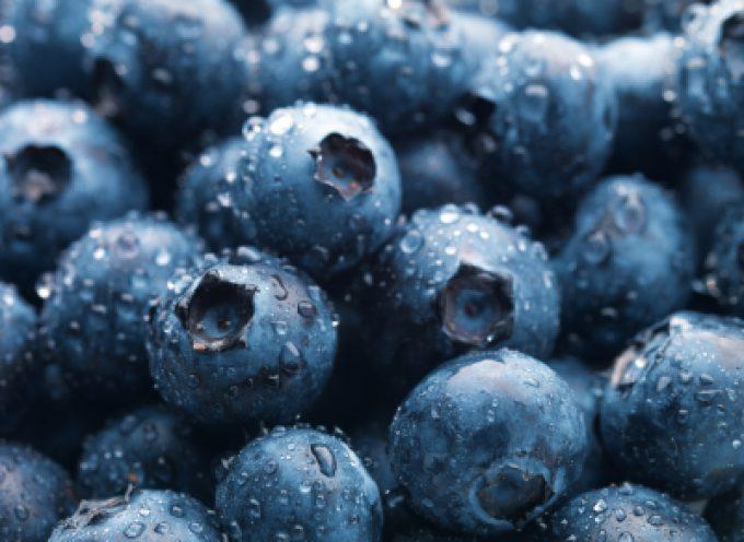 Vino rosso, uva e mirtilli: il piceatannolo contro il grasso