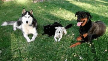 """Milano, """"Pro Plan Dog Training"""": Primo corso di galateo per cani in viaggio"""