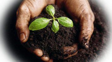 La FAO lancia un'iniziativa per riuscire a produrre più cibo in modo sostenibile dal punto di vista ambientale
