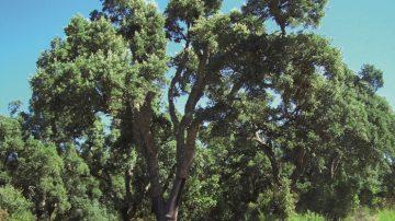 Itinerari insoliti alla scoperta di uno dei tesori più antichi e rappresentativi della Sardegna: le foreste da sughero