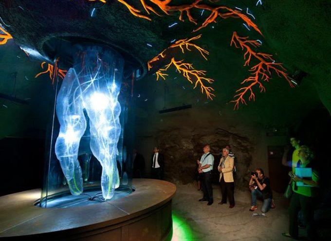 """Merano, inaugurato """"Il Regno sotterraneo delle piante"""" ai Giardini Sissi, Castel Truttmansdorff, per il 10° anniversario"""