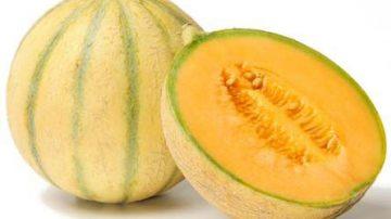 I meloni Igp della Lombardia assaltati dalle nutrie