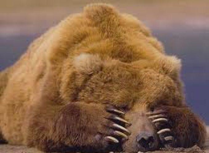 I Nas fermano la carne d'orso, rovinata la festa leghista