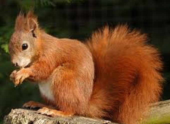 Metti lo scoiattolo in pentola