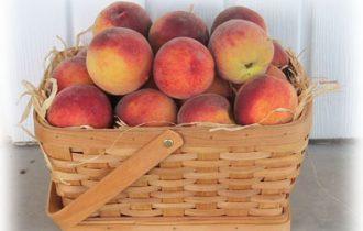 MR Fruitness: Nuova campagna di sensibilizzazione per 10.000 medici tedeschi