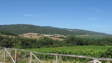 Vino di eccellenza: Vitigni tradizionali dello stesso territorio