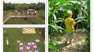 In Olanda anche il mais è un'attrattiva