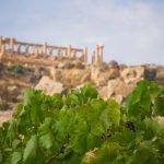 Vino, nasce progetto Diodoros per la Valle dei Templi