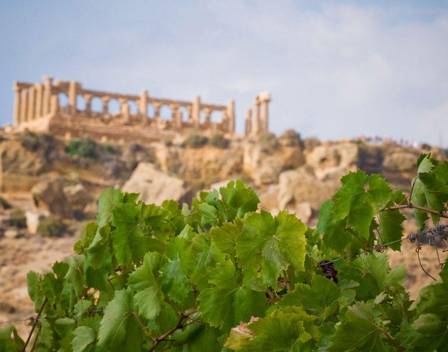 Il vino di qualità conquista la Valle dei Templi