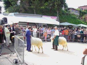 Murazzano (CN): Mostra delle pecore di Langa, razza da salvare