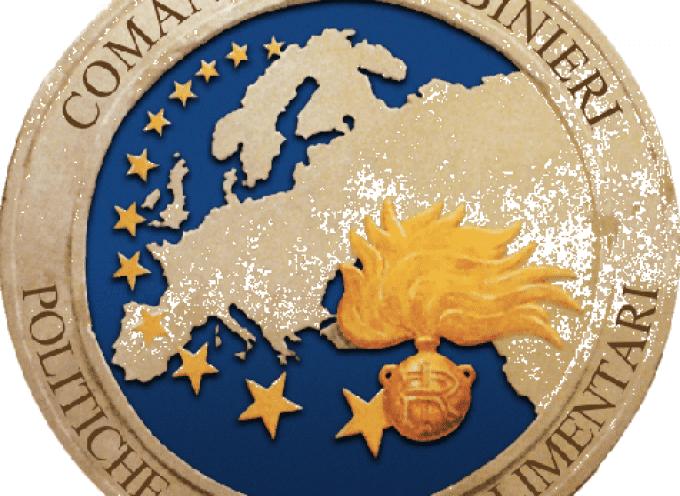 Serre fantasma: Truffa ai danni dell'UE con falsa documentazione