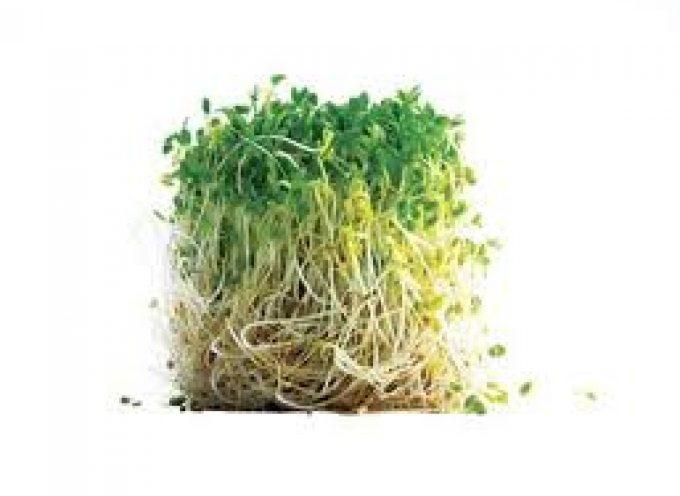 Broccoli: germogli ed in polvere combattono il cancro