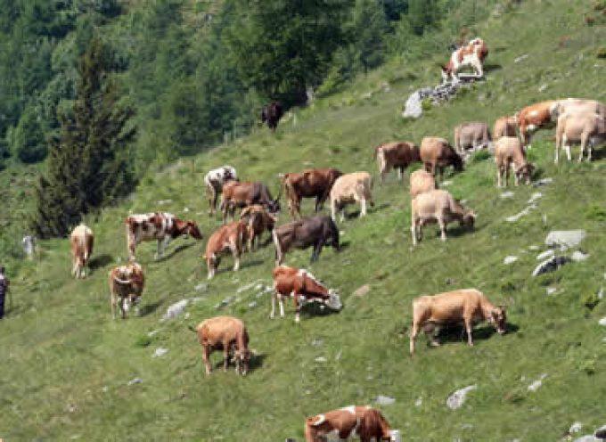 Lombardia: Si chiude la stagione dell'alpeggio
