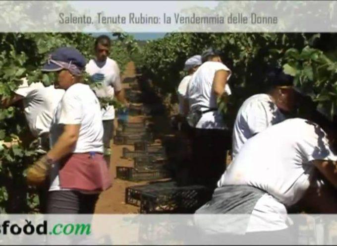 Salento, Tenute Rubino: la Vendemmia delle Donne. Intervista a Luigi Rubino (Video)