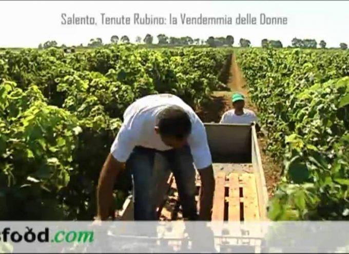 Salento, Tenute Rubino: la Vendemmia delle Donne. (Video) Intervista a Romina Leopardi