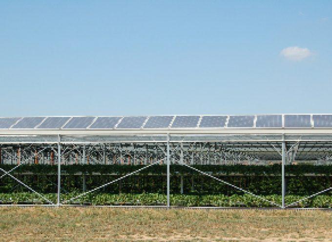 Serre fotovoltaiche: CMM e Agritechnology a Macfrut di Cesena